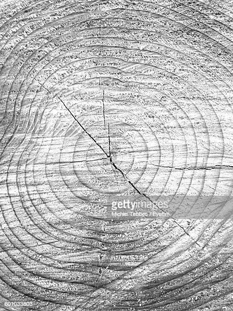 Full Frame Shot Of Tree Rings
