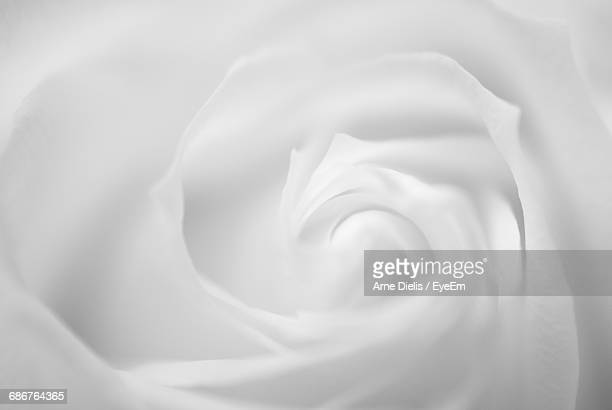Full Frame Shot Of White Rose