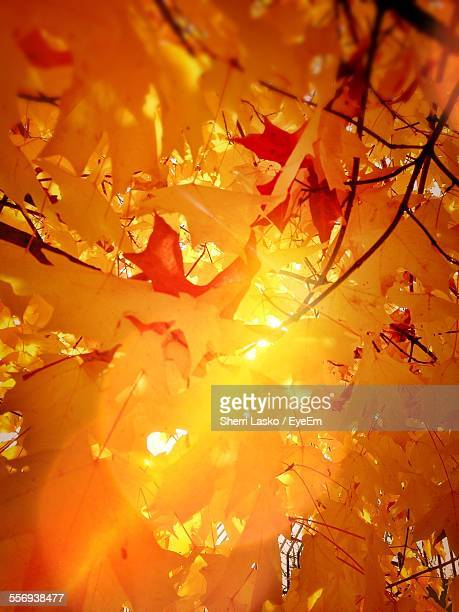 Full Frame Shot Of Yellow Leaves