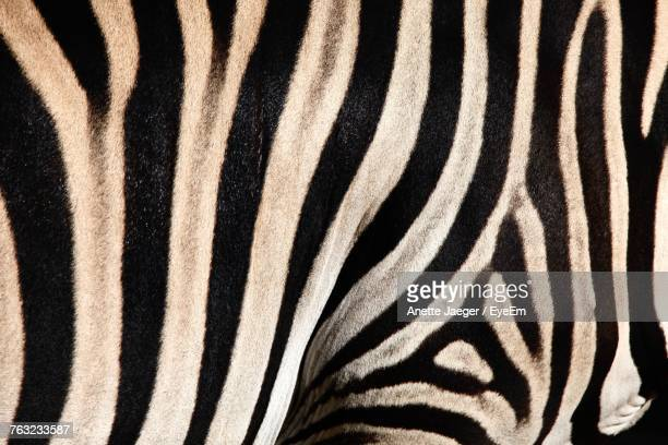 Full Frame Shot Of Zebra