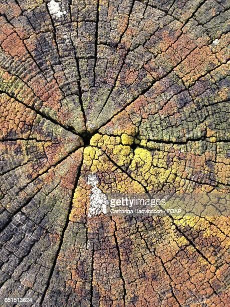 Full frame shot textured wooden