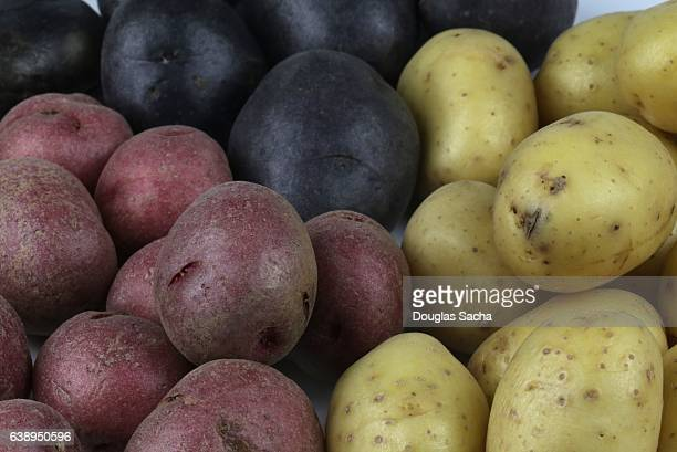 Full frame view of Potatoes with different colors and varieties (Solanum tuberosum)