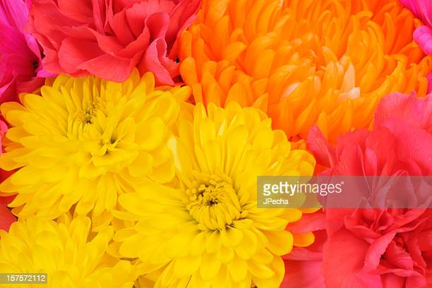 Full Frame Vivid Spring Floral Bouquet Background