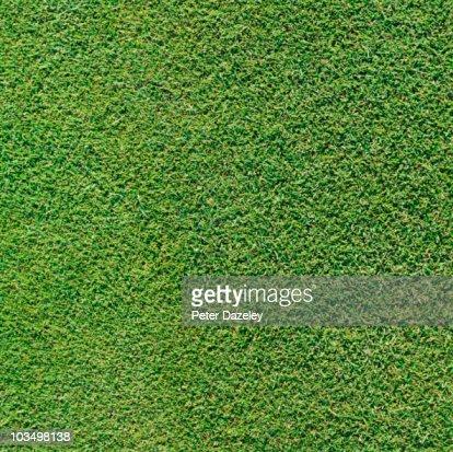 Full framed grass background 2 : Stock Photo
