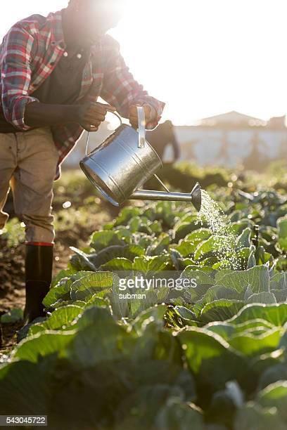 Afrikanische Mann in voller Länge köstlichen Gemüse Gießkanne
