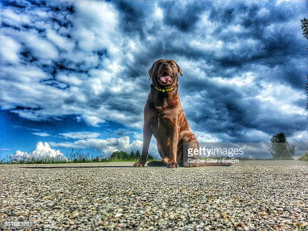 Full length of dog sitting on street against cloudy sky
