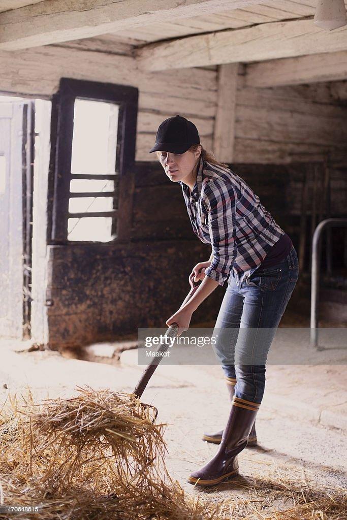 Full length of female farmer shoveling hay in barn