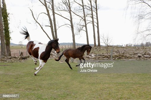 Full length of horses jumping on field