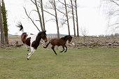 Full length of horses jumping on field