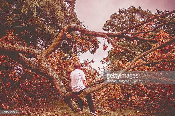 Full Length Rear View Of Boy Sitting On Fallen Tree In Forest During Autumn