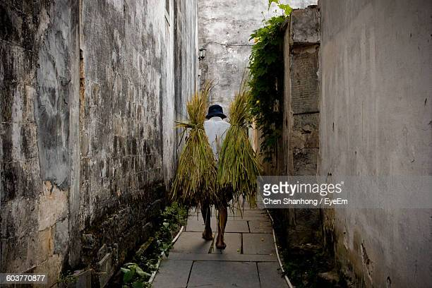 Full Length Rear View Of Farmer Carrying Crops While Walking On Footpath Amidst Wall