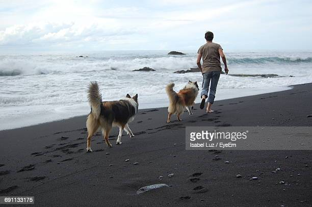 Full Length Rear View Of Playful Man With Rough Collies At Beach Against Sky