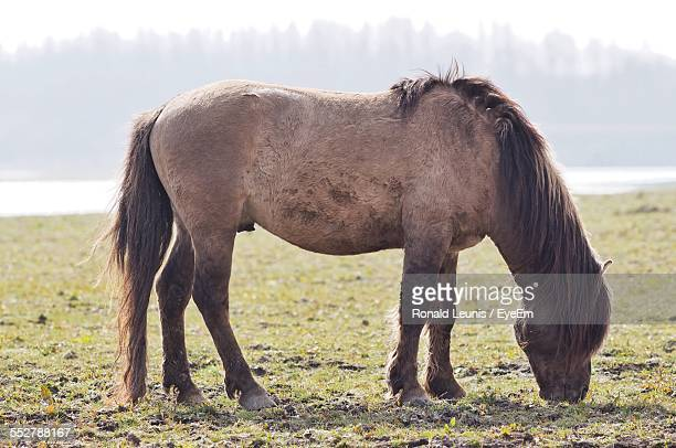 Full Length Side View Of Horse Grazing On Field