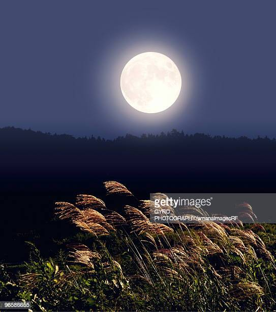 Full moon and Japanese silver grass, long exposure