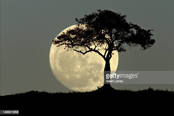 Full moon and tree silhouetted at dusk