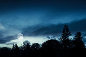Full moon in blue sky over dark forest at night; natural background photo