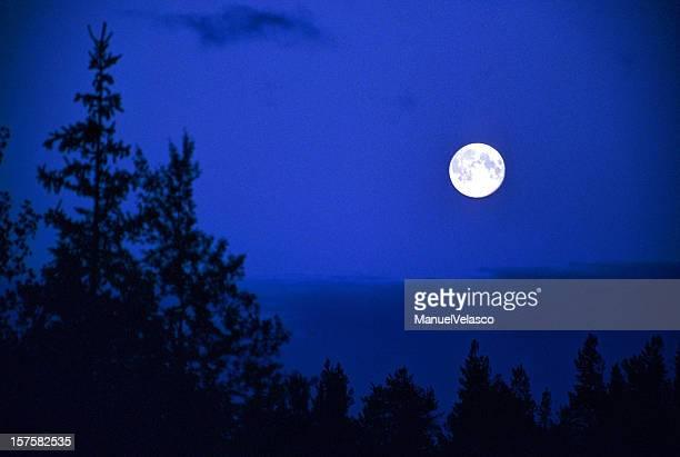 満月をの木