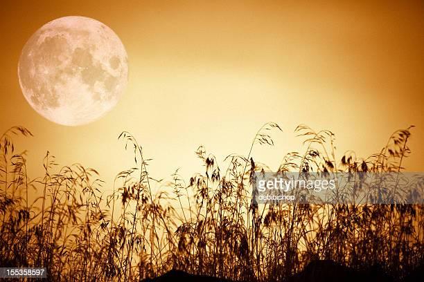 昇る満月-琥珀橙スカイシルエットの芝生自然