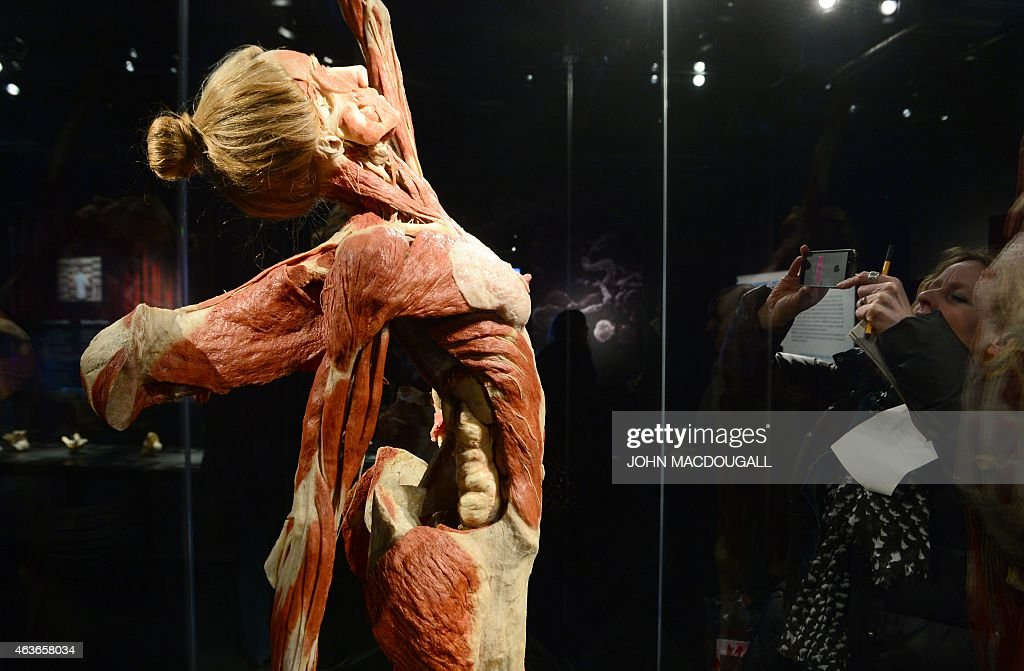 a full plastinated body of a woman is on display at the 'menschen, Muscles