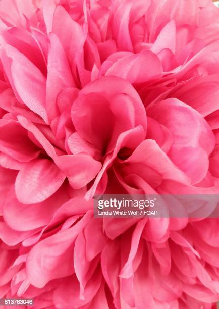 Fullframe of pink flower petals