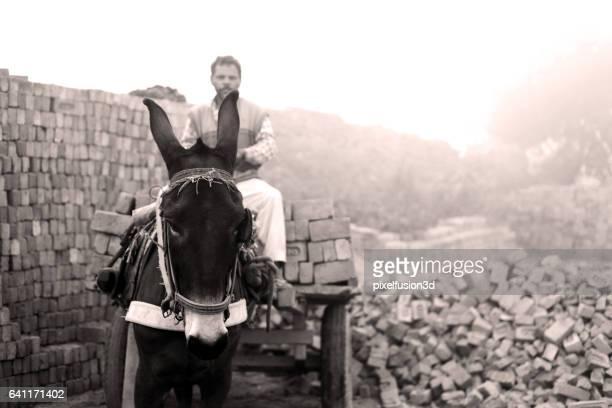 Fully loaded of donkey cart of bricks