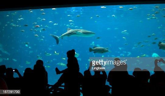 Amusez-vous à l'aquarium