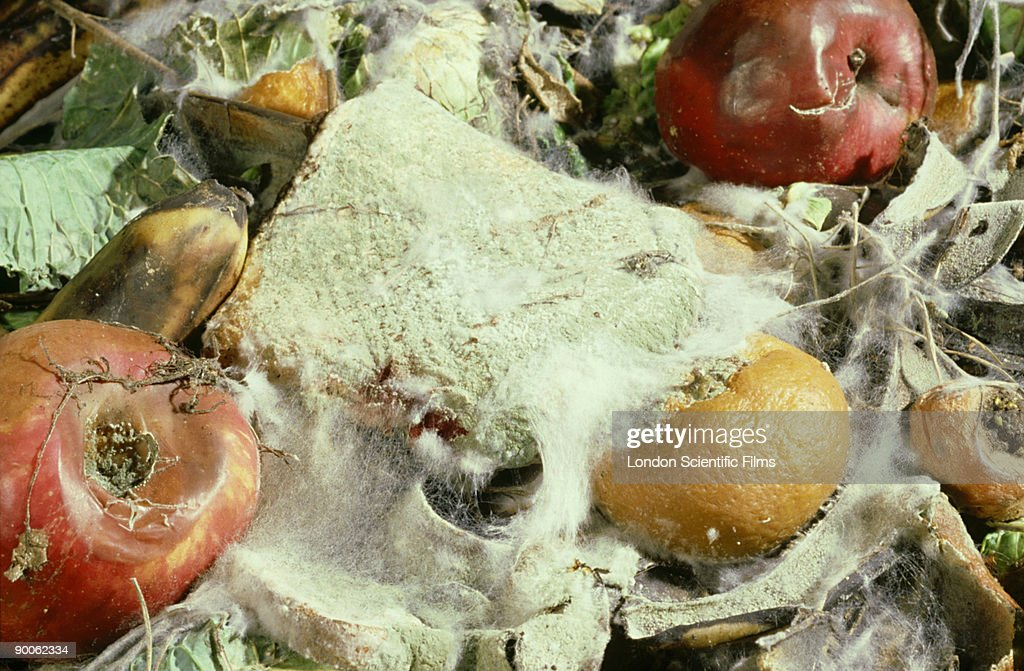 fungal decay of fruit and vegetables: : Stock Photo
