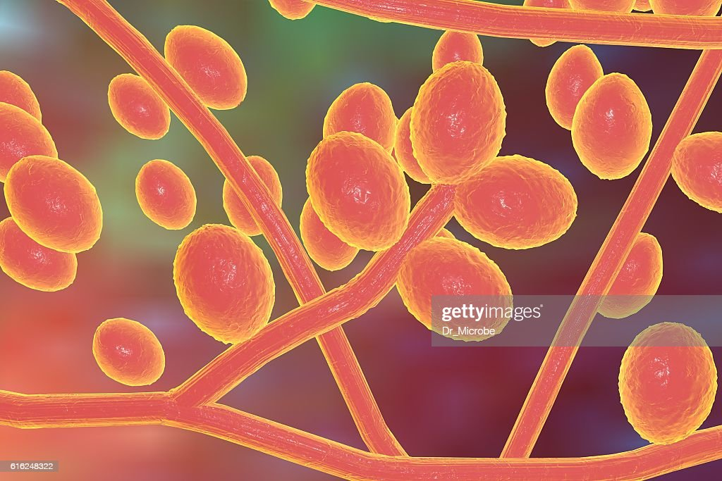 Fungi Trichophyton illustration : Stock Photo