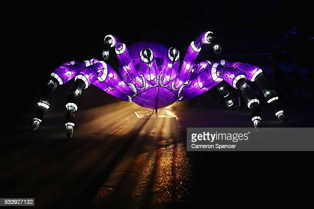 A funnelweb spider light sculpture is seen during a media preview of Vivid Sydney illuminated displays at Taronga Zoo on May 24 2016 in Sydney...
