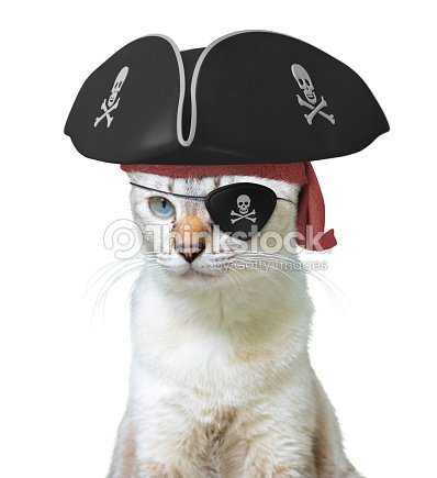 025effb6e5c92 Funny animal costume of a cat pirate captain wearing a tricorn hat and  eyepatch with skulls