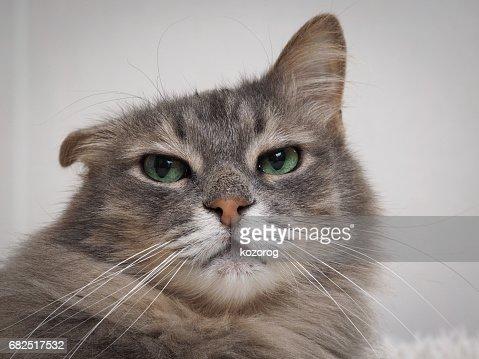 small cat id tags