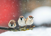 birds sitting on a branch in the snow in Park at winter