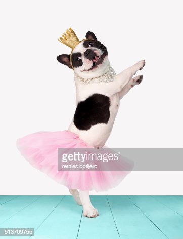 Funny bulldog ballerina