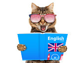 Funny cat is learning English. Cat reading a book.