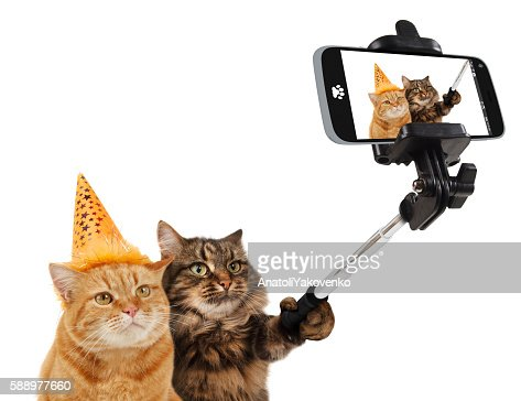 Funny cats are taking a selfie with smartphone camera. : Foto de stock