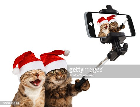 Funny cats are taking a selfie with smartphone camera. They are wearing Christmas hats. Selfie party. : Stock Photo
