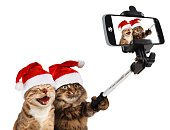 Funny cats are taking a selfie with smartphone camera. They are wearing Christmas hats. Selfie party.