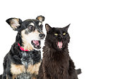 Funny photo of cat and dog with shocked or excited expressions looking to side into copy space