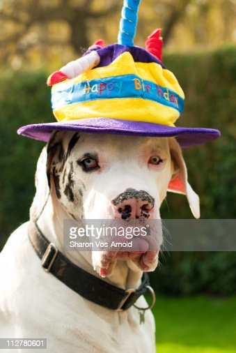 Funny dog : Stock Photo