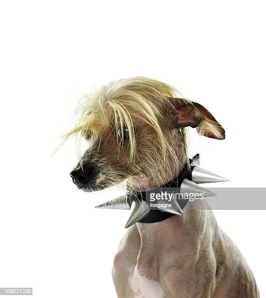 Divertido Retrato de perro