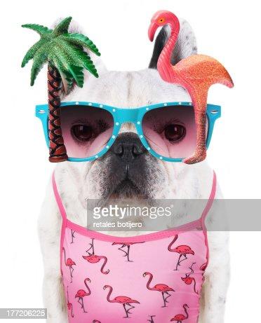 funny dog  wears flamingo glasses : Stock Photo