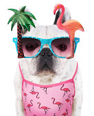 funny dog  wears flamingo glasses