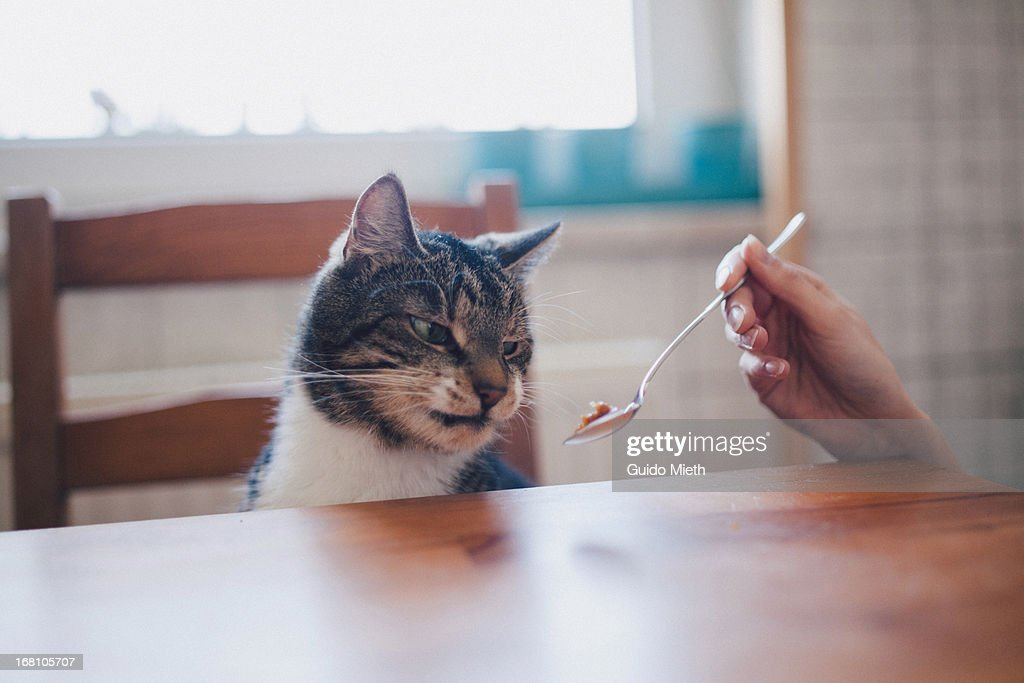 Funny looking cat . : Stock Photo