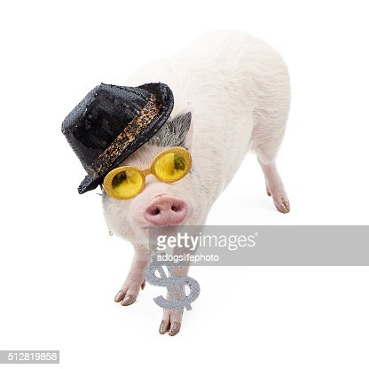 Lustiger Geld hungrige Katze : Stock-Foto
