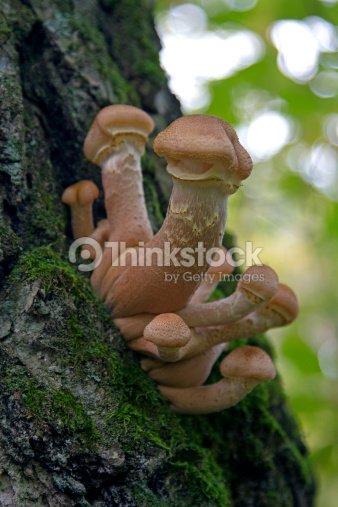 Funny Mushroom, : Stock Photo