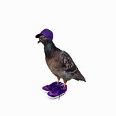 funny pigeon in violet sneakers and cap portrait mixed media collage