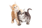 Two cute and funny playful kittens. One with paw on others head.