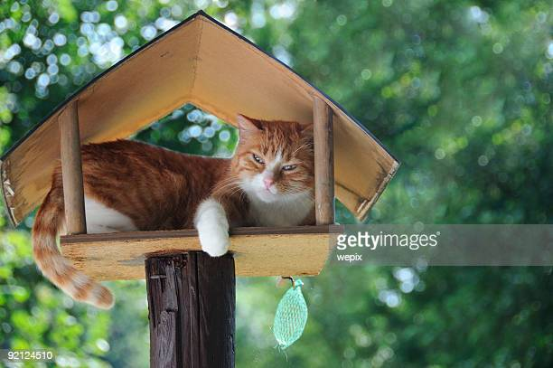 Funny red white cat sleeping in birdhouse green leaves