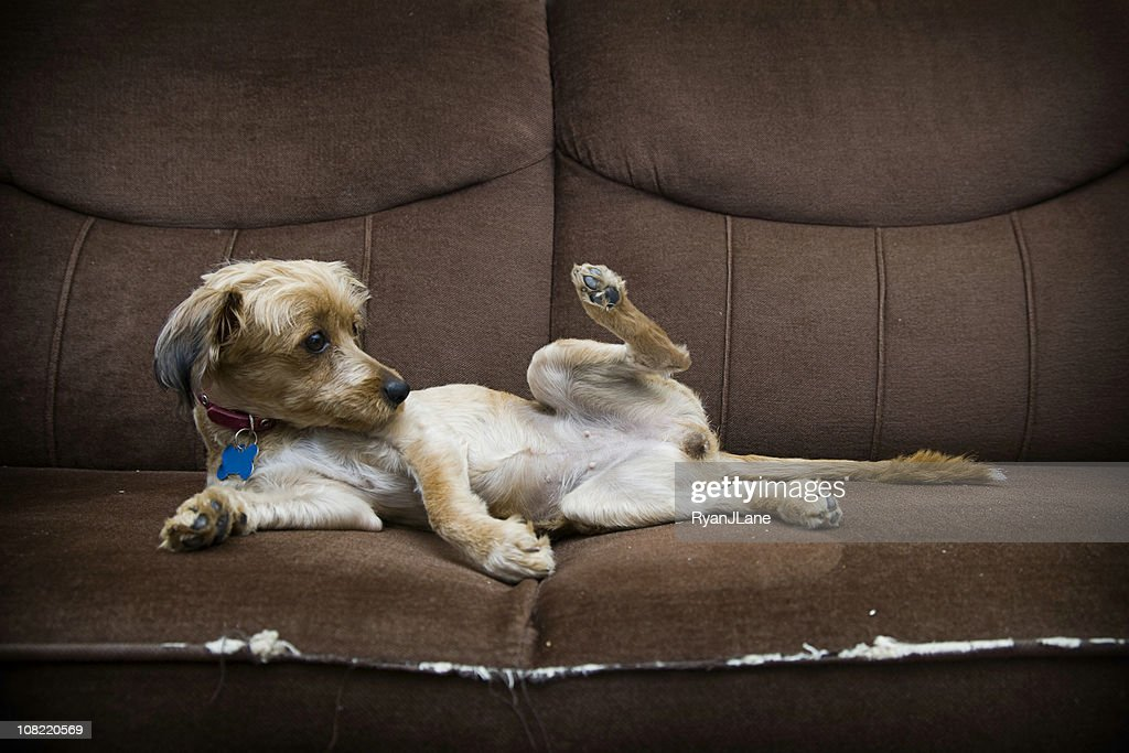 Funny Resting Dog with Copy Space : Stock Photo