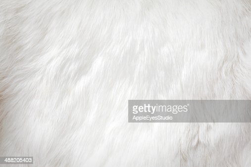 fur background : Stock Photo